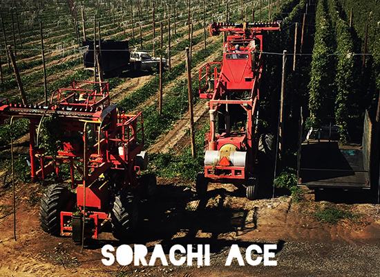 sorachi_ace